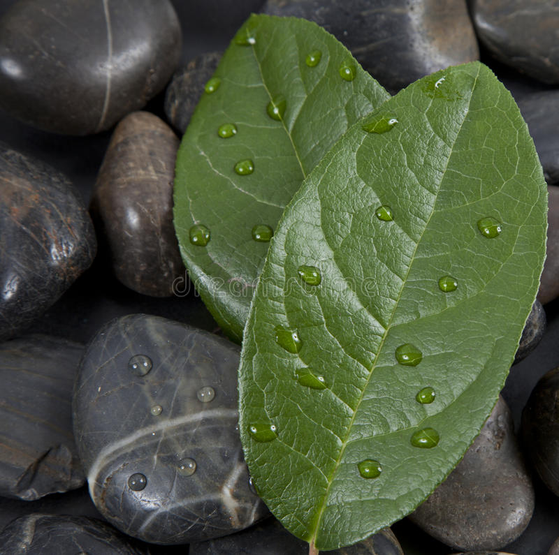 Zen stones and leaves with water stock image