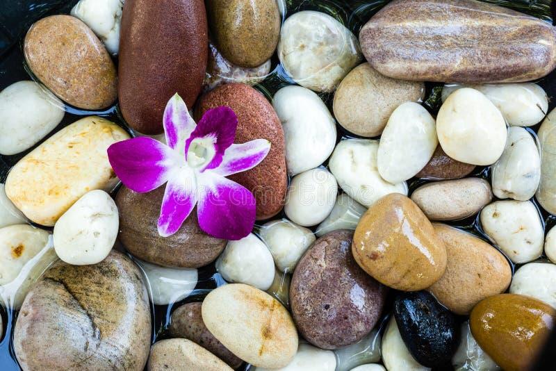 Zen Stones mit rosa Orchidee lizenzfreie stockfotografie