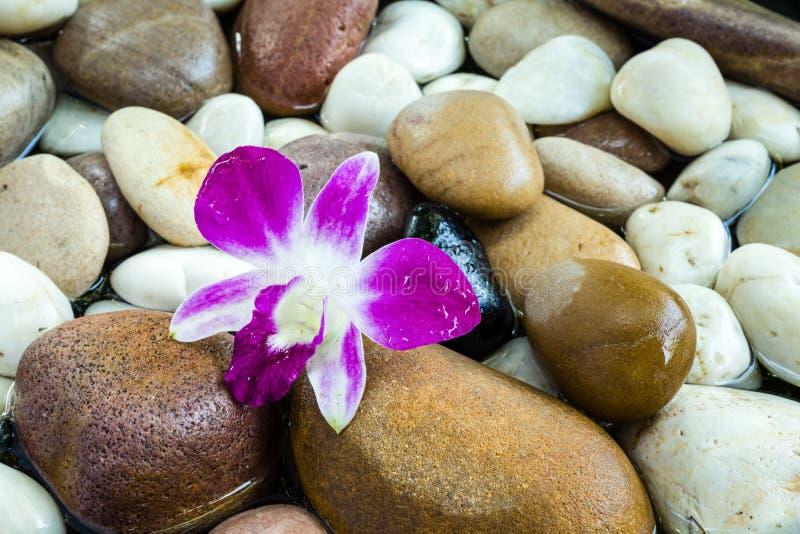Zen Stones mit rosa Orchidee lizenzfreie stockbilder