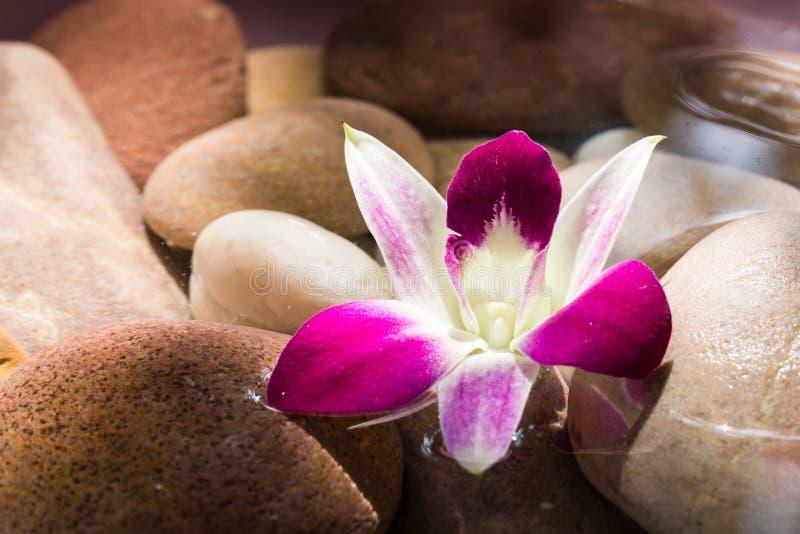 Zen Stones mit rosa Orchideenblumen-Morgenlicht stockbild