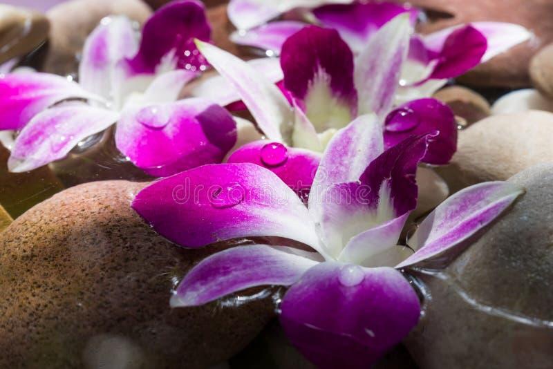Zen Stones mit rosa Orchideenblumen-Morgenlicht stockfoto