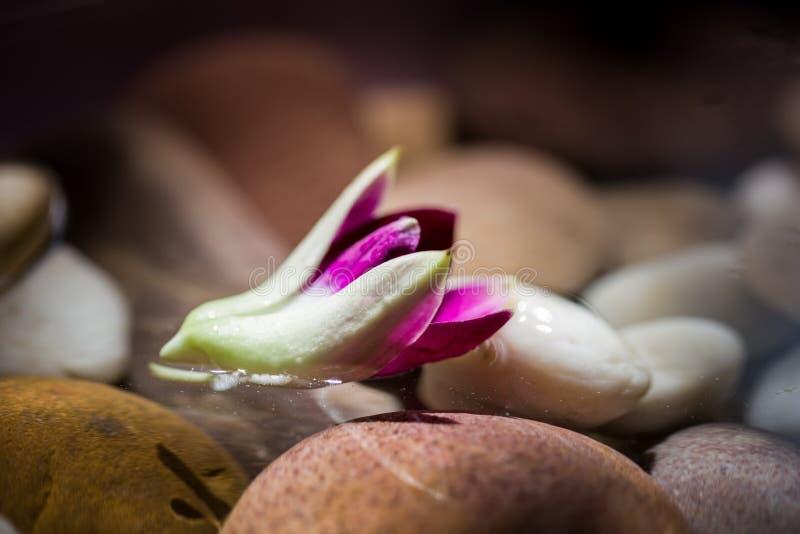 Zen Stones mit rosa Orchideenblumenfloss auf dem Wassermorgenlicht stockbild