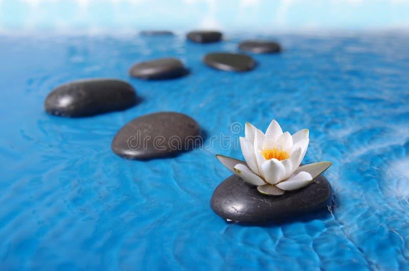 Zen stones in water. Zen stones in blue water with lily royalty free stock photo