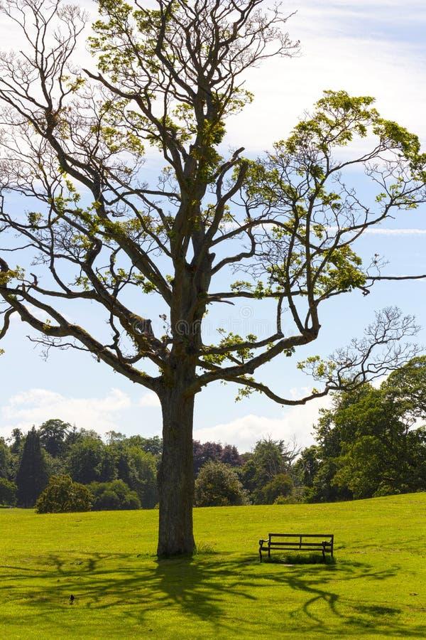 Zen Tree foto de archivo libre de regalías
