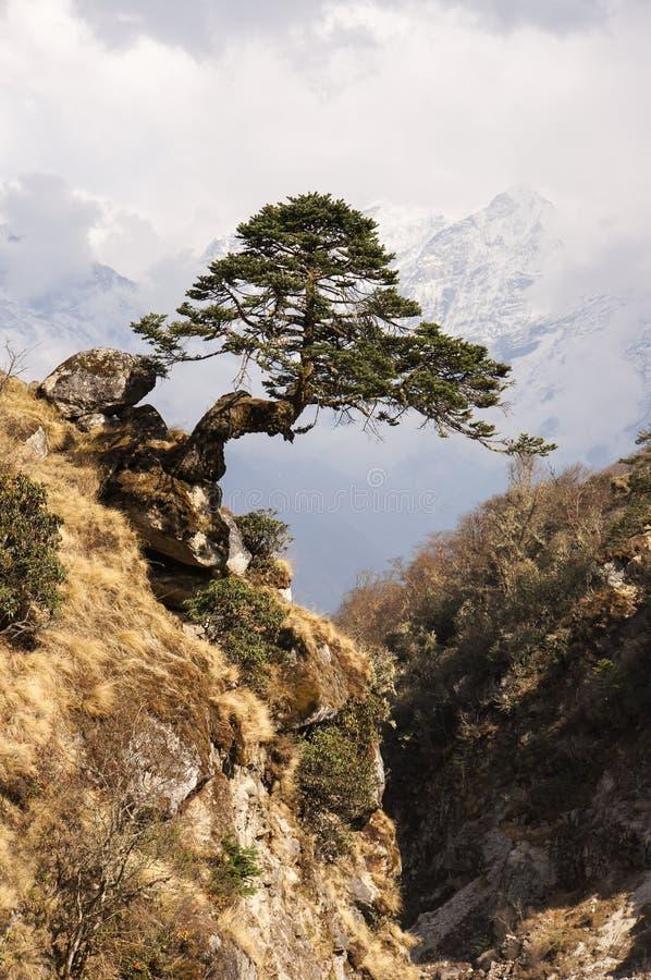 Zen tree above ravine stock photo
