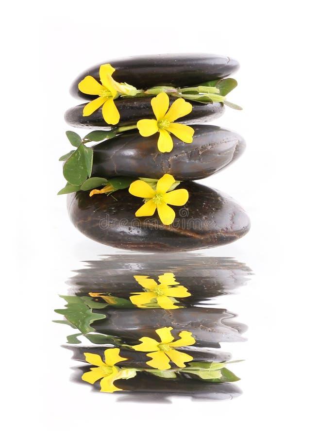 ZENES Stone y flores amarillas con la reflexión sobre blanco fotos de archivo