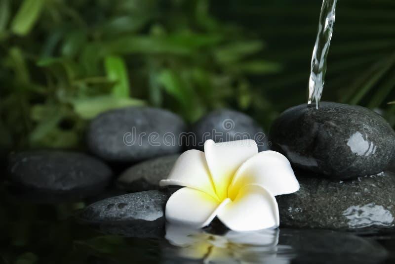 Zensteine und -blume im Wasser lizenzfreies stockfoto