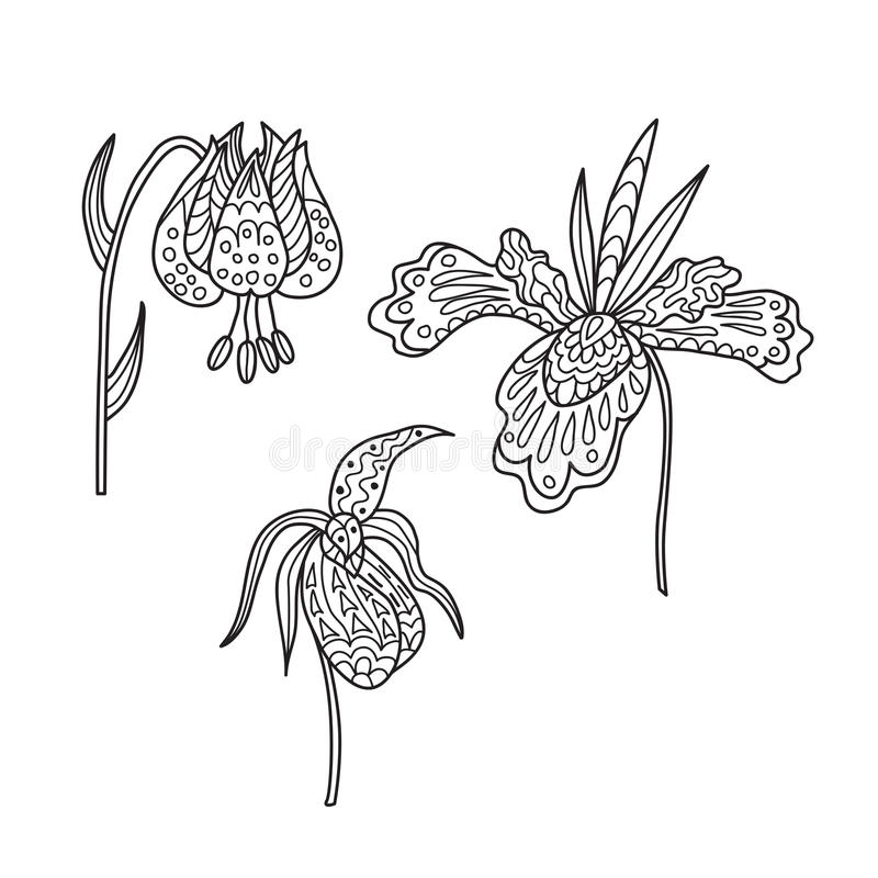 Zentangle the Baikal wildflowers: lily, iris and orchid. For adult anti stress Coloring Page for art therapy, illustration in doodle style. Set of 3 vector vector illustration