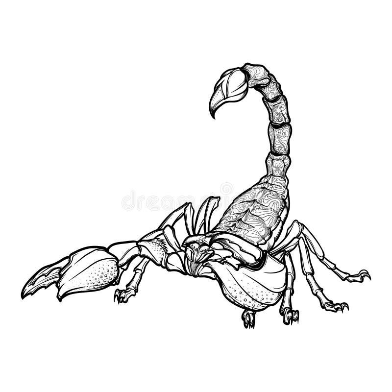 Zentangle stiliserade tecknad filmscorpioen som svart skissar isolerat på vit bakgrund stock illustrationer