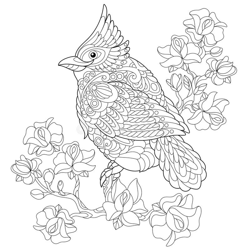Zentangle stylized cardinal bird. Coloring book page of northern red cardinal bird sitting on cherry blossoming tree branch. Freehand sketch drawing for adult royalty free illustration