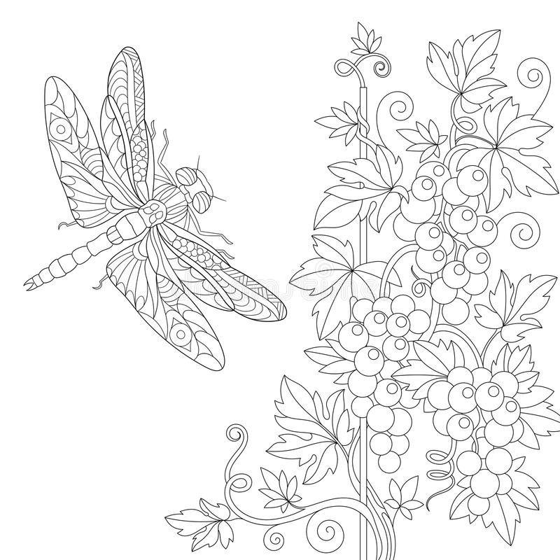 Zentangle stylized dragonfly and grape vine. Coloring page of dragonfly and grape vine. Freehand sketch drawing for adult antistress colouring book with doodle stock illustration