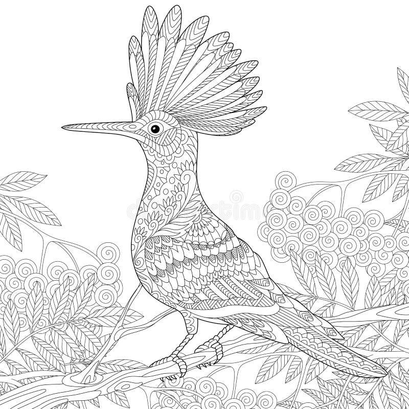 Zentangle stylized hoopoe vector illustration