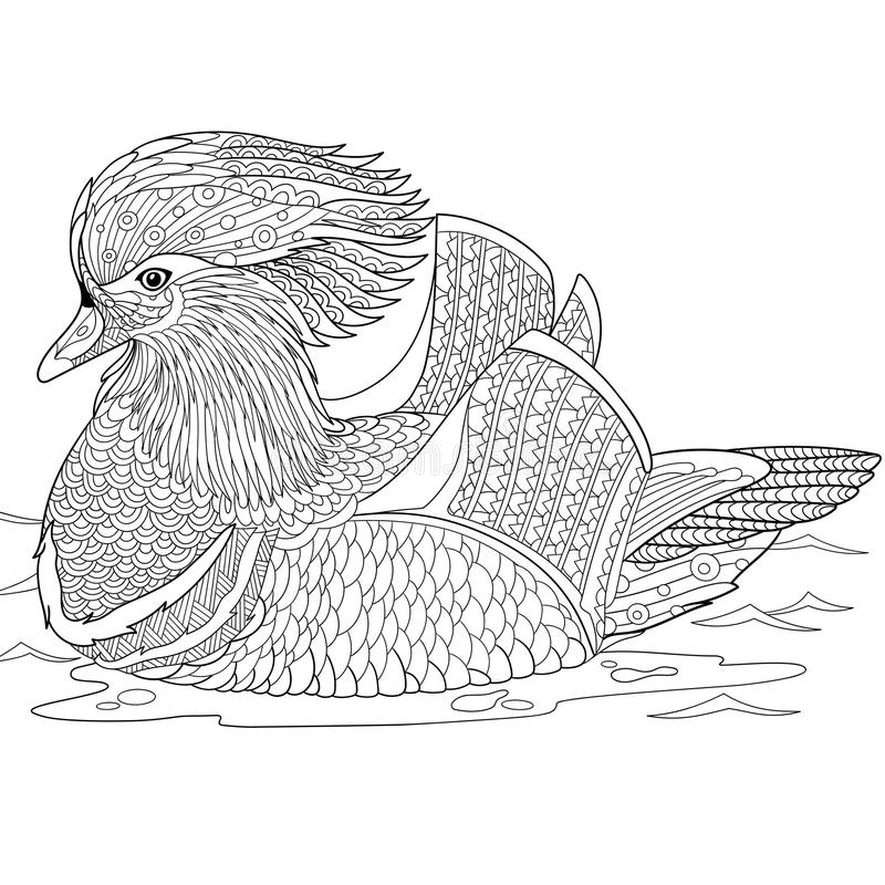 Zentangle stylized mandarin duck. Zentangle stylized cartoon mandarin duck, on white background. Hand drawn sketch for adult antistress coloring page, T-shirt royalty free illustration
