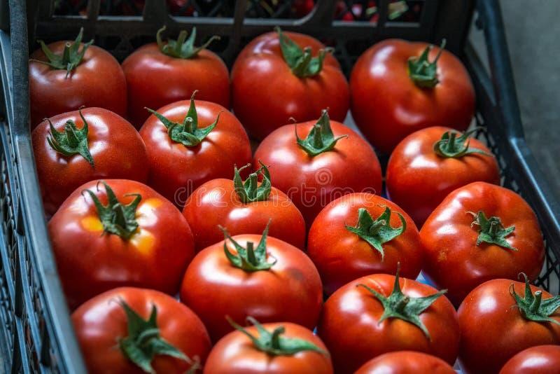 Zentraler Markt Tiflis lizenzfreies stockfoto