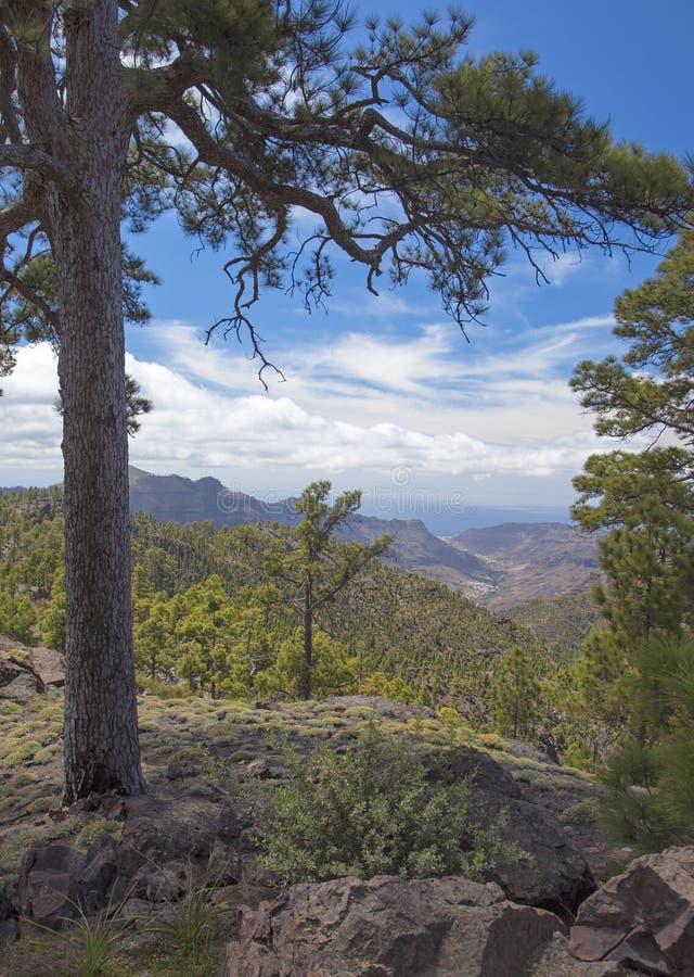 Zentrales Gran Canaria, Naturreservat Inagua lizenzfreies stockfoto