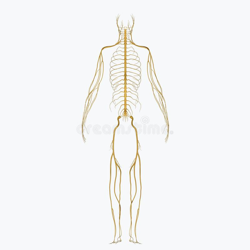 zenuwen vector illustratie