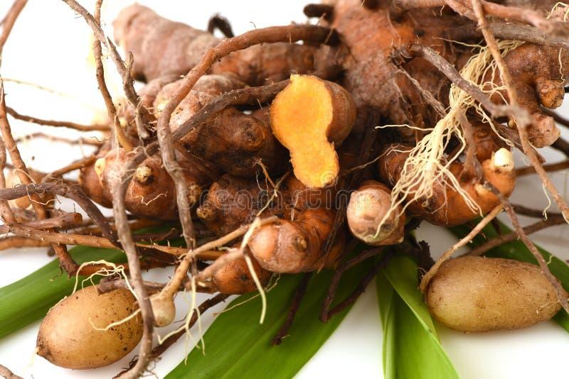 Zenzero di Plai (nome tailandese), di Cassumunar, rizoma cassumunar, fresca ed in polvere dello Zingiber della radice del Bengala fotografia stock libera da diritti