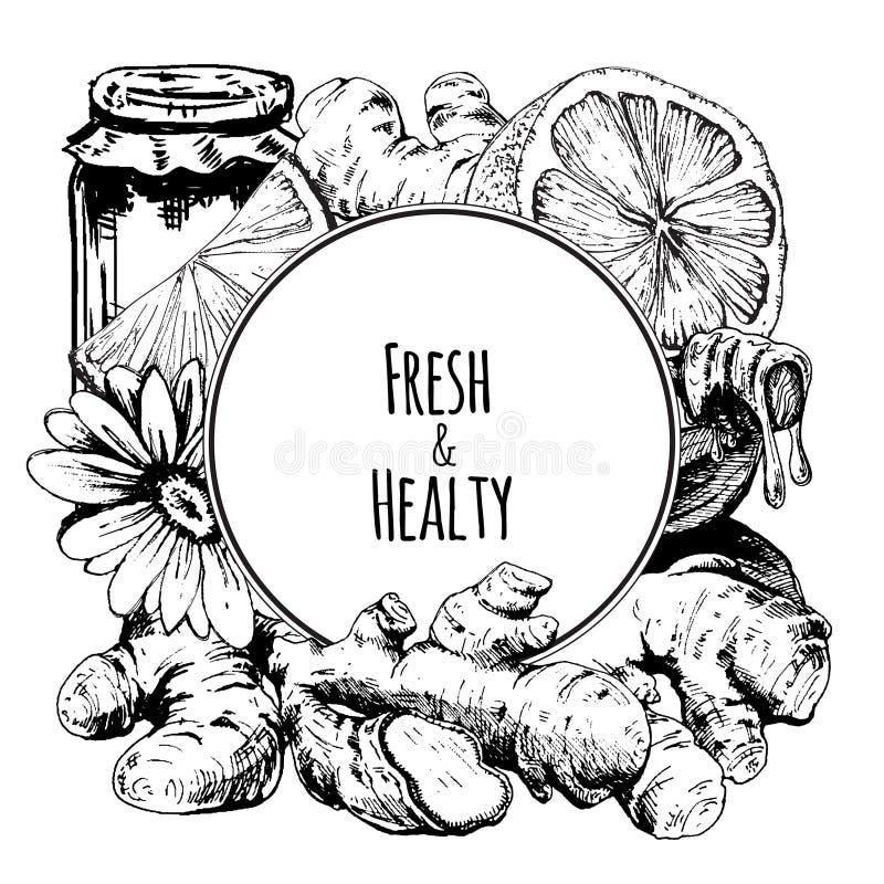 Zenzero, miele, fiore e limone royalty illustrazione gratis