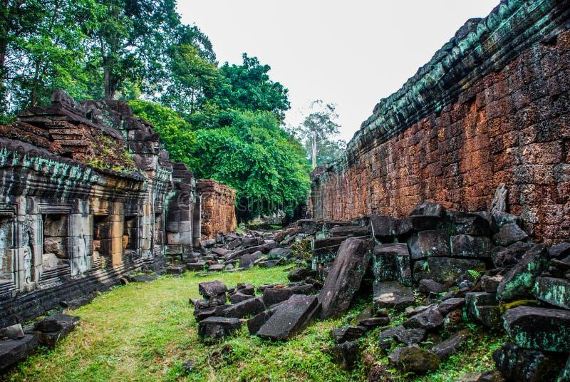 Zerbröckelnde Tempelwände in den üppigen Dschungeln von Angkor Wat stockbilder