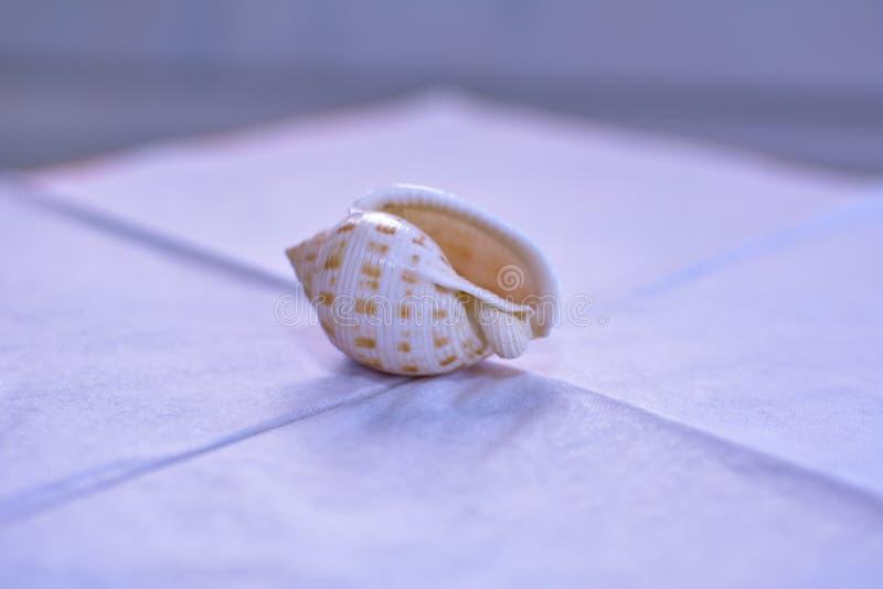 Zerbrechliche Muschel auf weißer Serviette lizenzfreie stockbilder