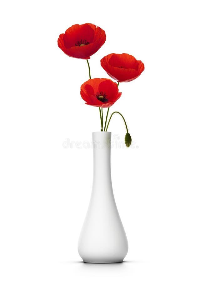 Zerbrechliche rote Mohnblumen lizenzfreies stockbild