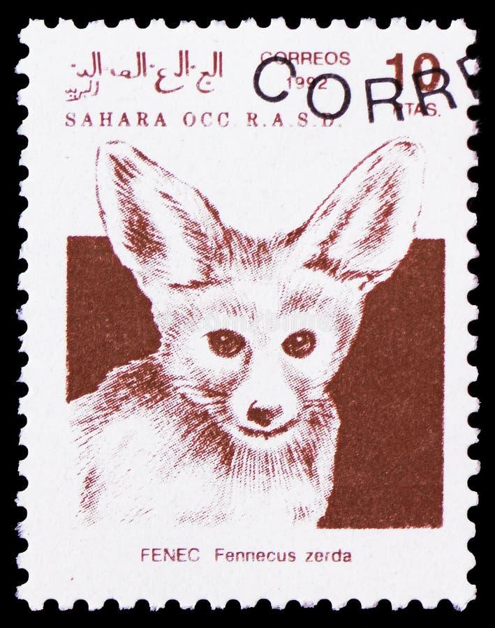Zerda Fennecus лисы Fennec, Сахара Occ serie, около 1992 стоковая фотография rf