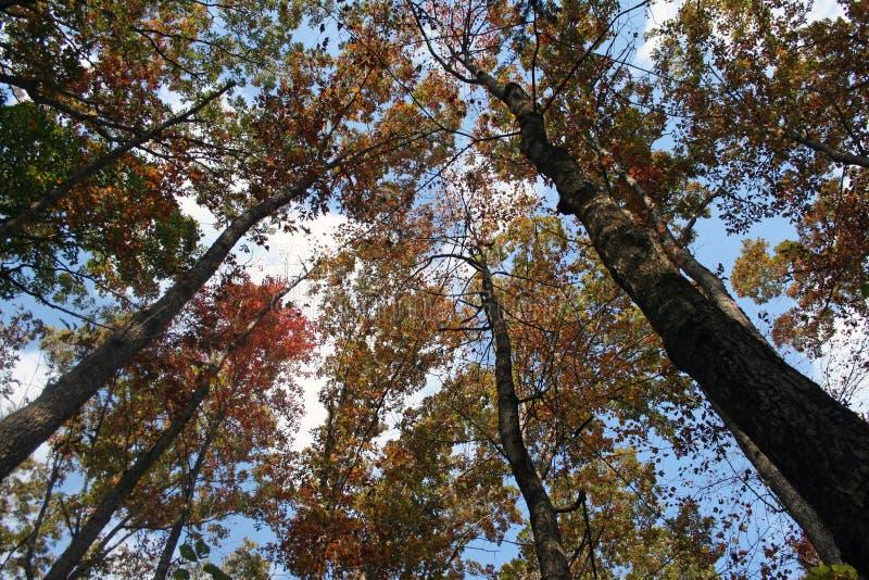 zerkania słońca drzewa zdjęcie stock