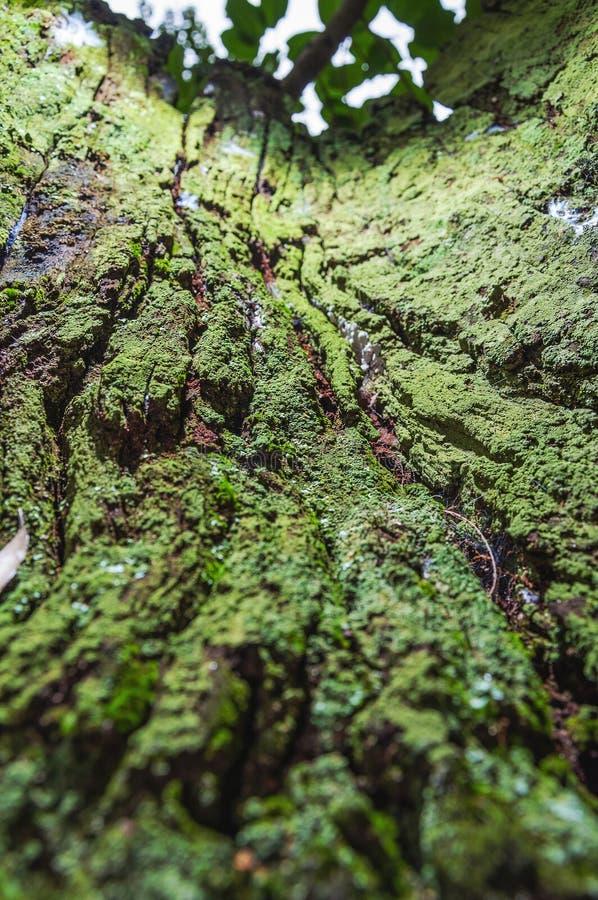 Zerlegungsbaumrinde umfasst durch grünes Moos stockfoto