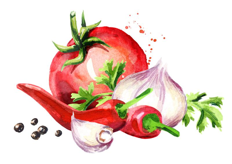 Zerreißen Sie Tomate mit jungem Knoblauch, Paprikapfeffern und Pfefferkörnern Gezeichnete Illustration des Aquarells Hand lokalis vektor abbildung
