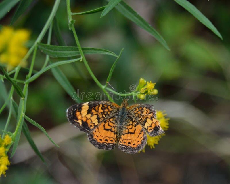 Zerrissener Schmetterling lizenzfreies stockfoto