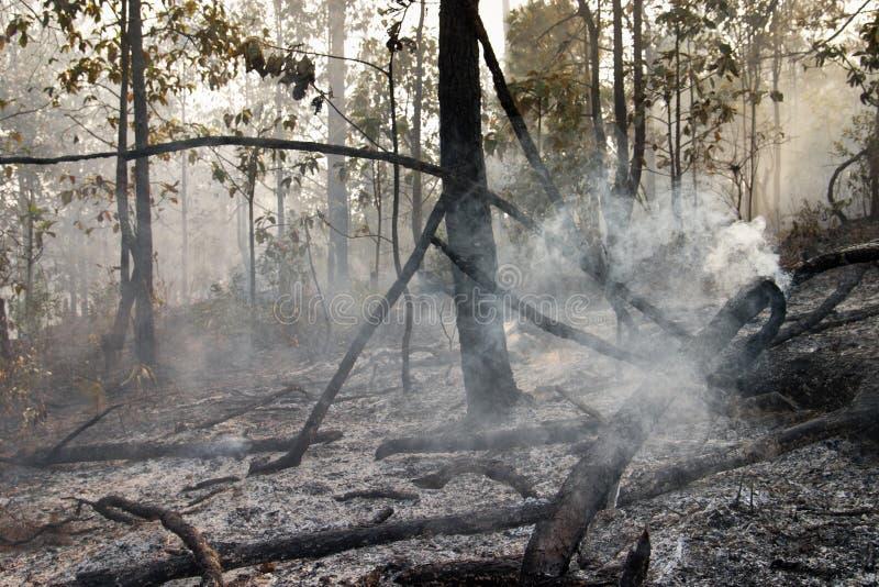 Zerstört durch das Brennen des tropischen Waldes lizenzfreie stockfotos