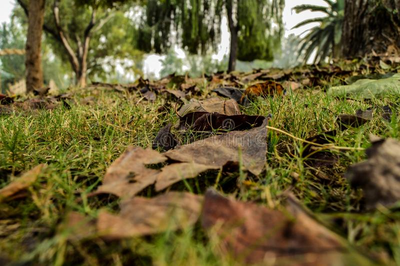 Zerstreute getrocknete Blätter während der Herbstsaison lizenzfreies stockfoto
