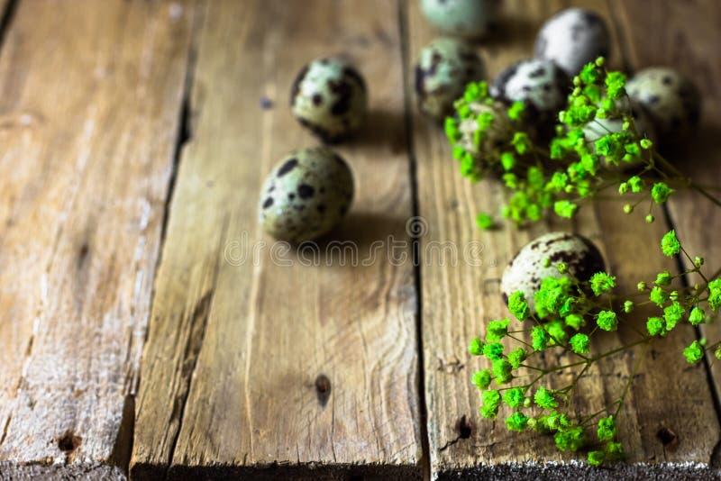 Zerstreuter empfindlicher Frühling der Wachteleier blüht auf gealtertem Scheunenholz, Ostern-Dekoration stockfotos
