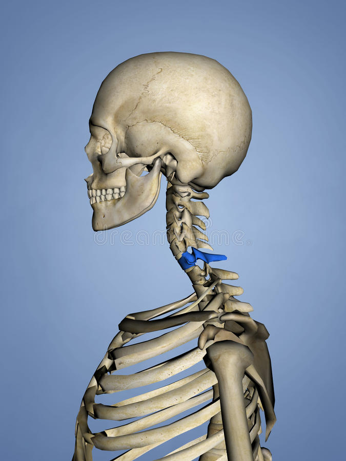 Großartig C6 Wirbel Fotos - Anatomie Von Menschlichen Körperbildern ...