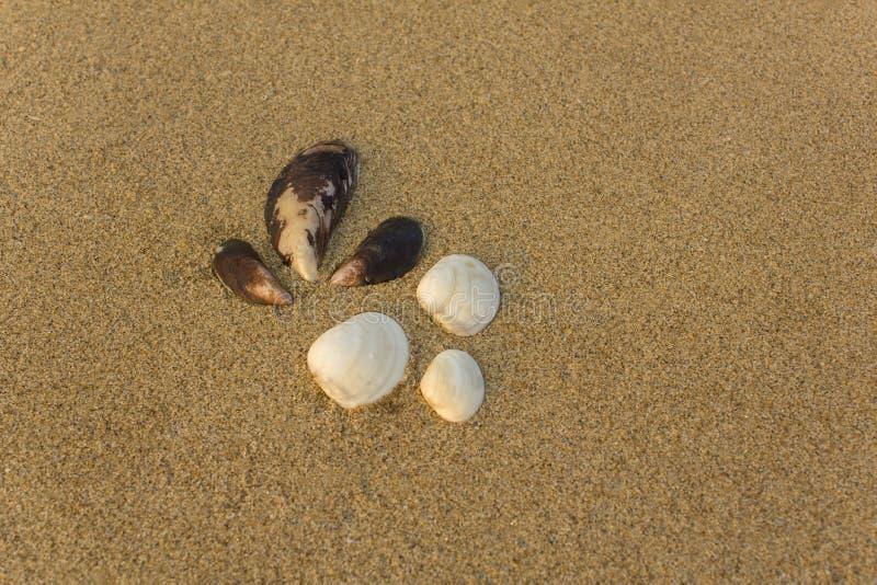 Zes grote witte en bruine shells sluiten omhoog op een vaag geel zand stock afbeeldingen