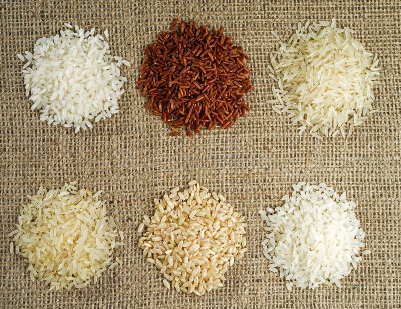 Zes hopen van rijst van verschillende verscheidenheden op de achtergrond van het ontslaan royalty-vrije stock foto's