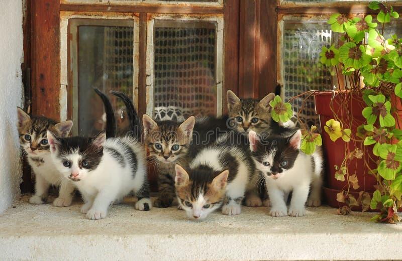 Zes kleine katten royalty-vrije stock afbeelding