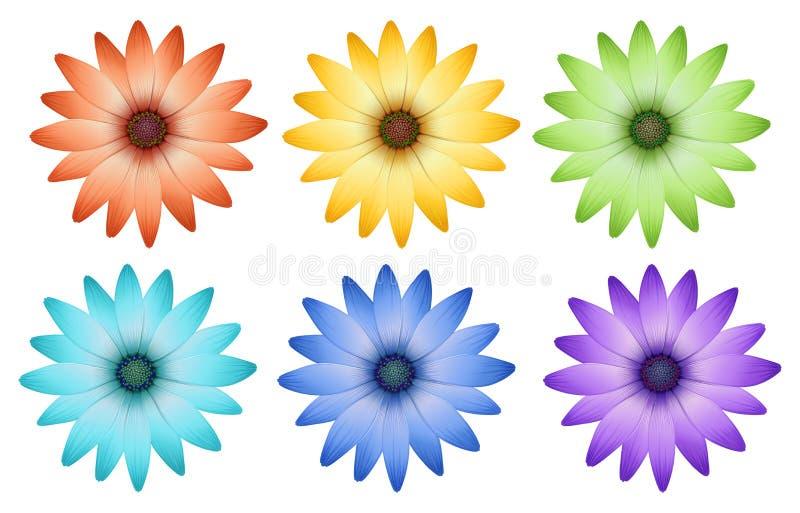 Zes kleurrijke bloemen stock illustratie