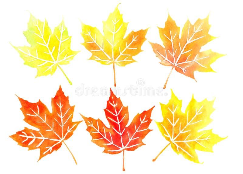 Zes oranje Canadese esdoornbladeren royalty-vrije illustratie