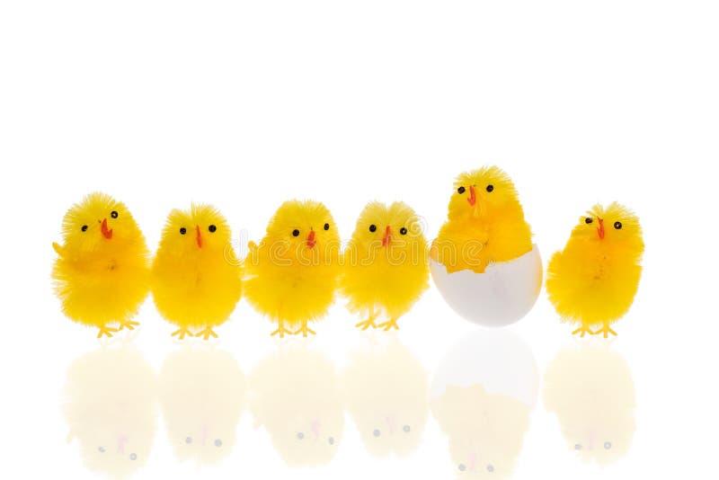 Zes Pasen-kippen op een witte achtergrond stock afbeeldingen