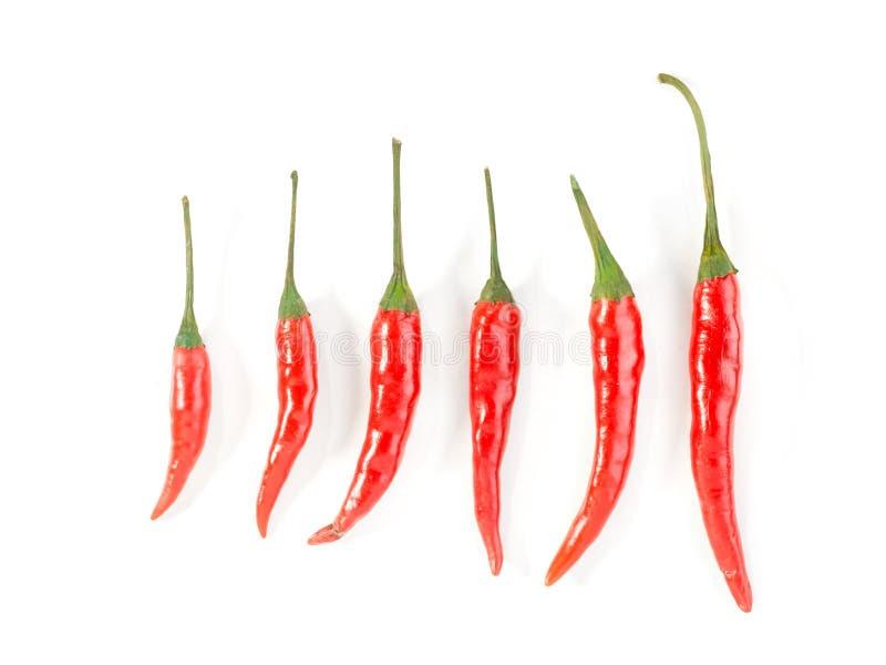 Zes rode chillis stock afbeelding