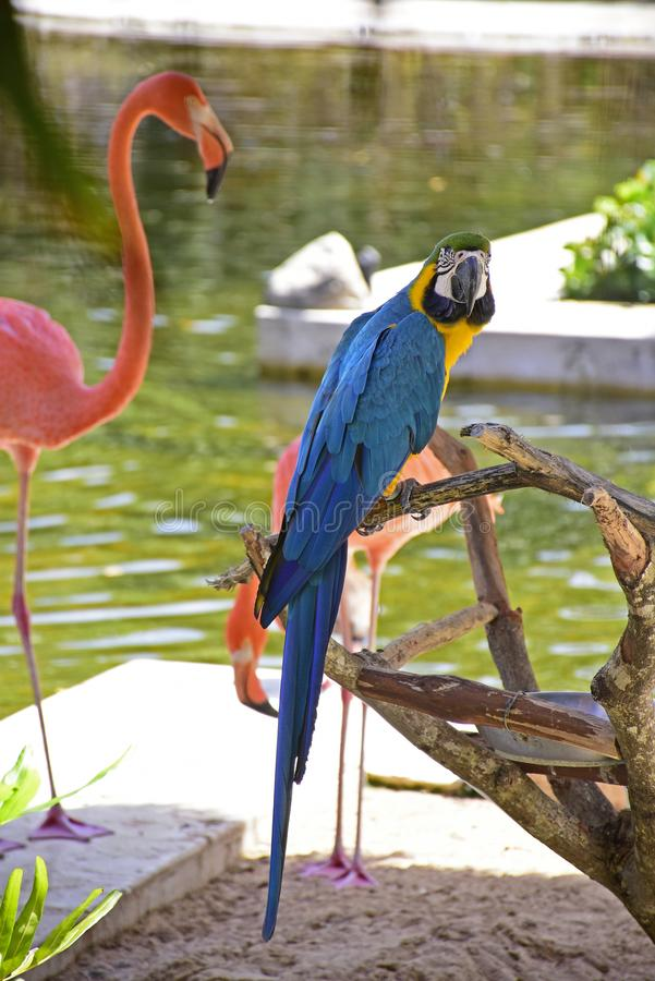 Zespół kolorowi tropikalni ptaki: guacamaya i flmaingo zdjęcia royalty free