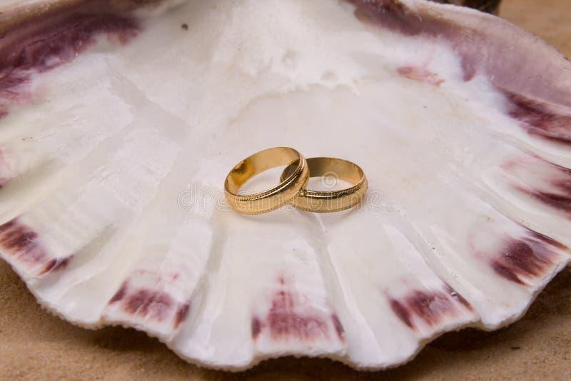 zespół skorupy ślub zdjęcie royalty free