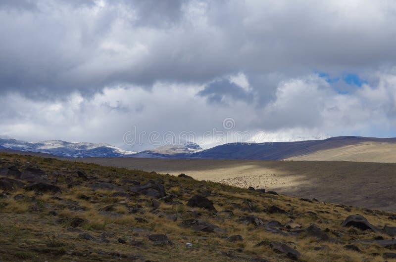 Zet Aragats op die door wolken wordt behandeld Weergeven aan hooglandweide op berghelling royalty-vrije stock afbeeldingen