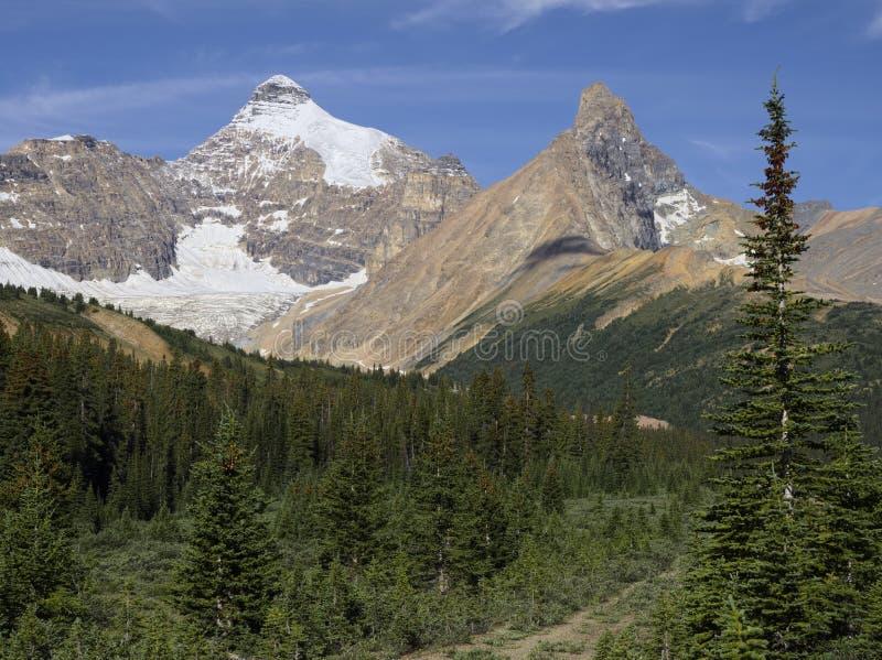 Zet Athabasca op royalty-vrije stock fotografie