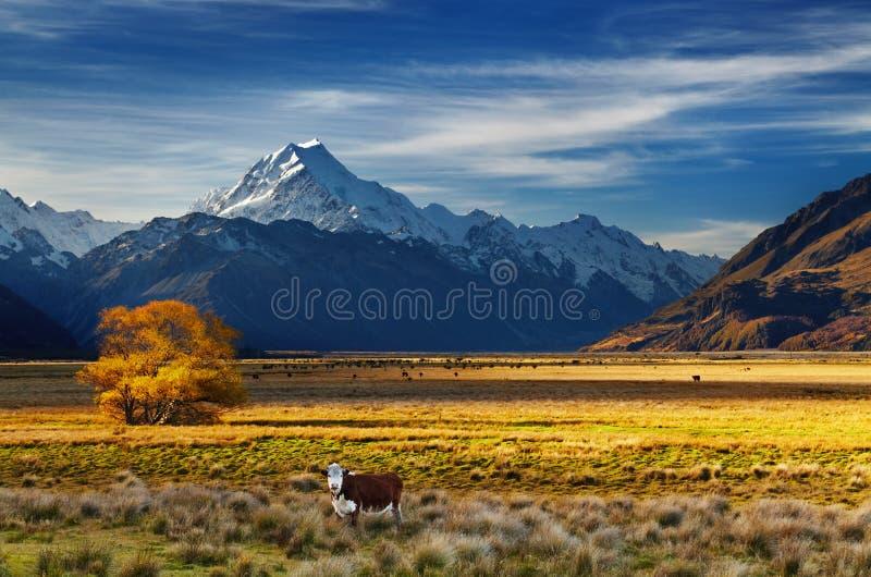 Zet Cook, Canterbury, Nieuw Zeeland op royalty-vrije stock fotografie