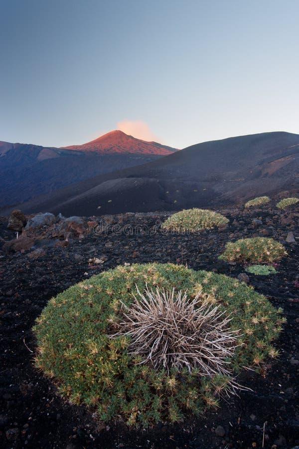 Zet Etna op stock afbeeldingen