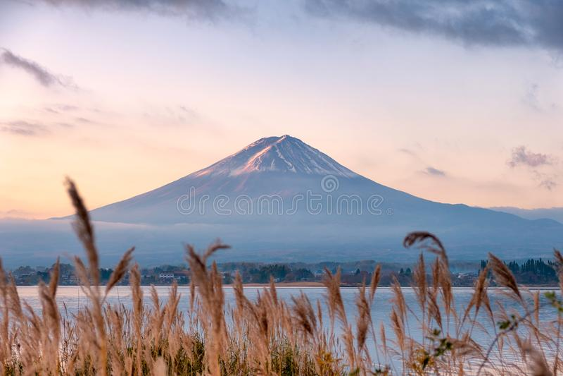 Zet fuji-San met gouden weide in Kawaguchiko-Meer bij zonsopgang op stock afbeeldingen