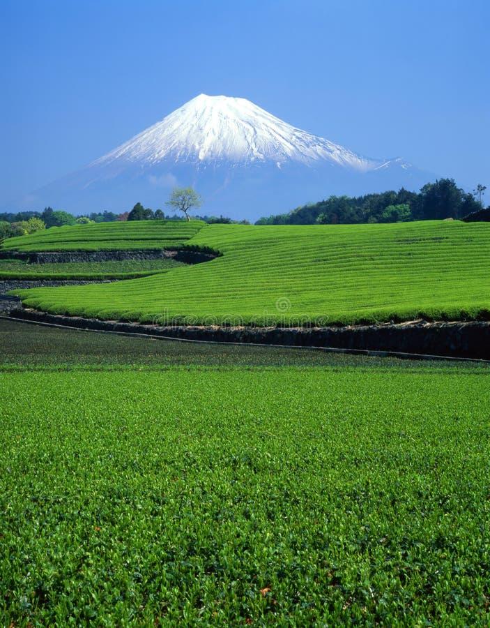Zet Fuji XI op royalty-vrije stock foto