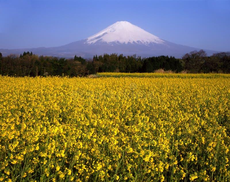 Zet Fuji XXVI op stock afbeeldingen
